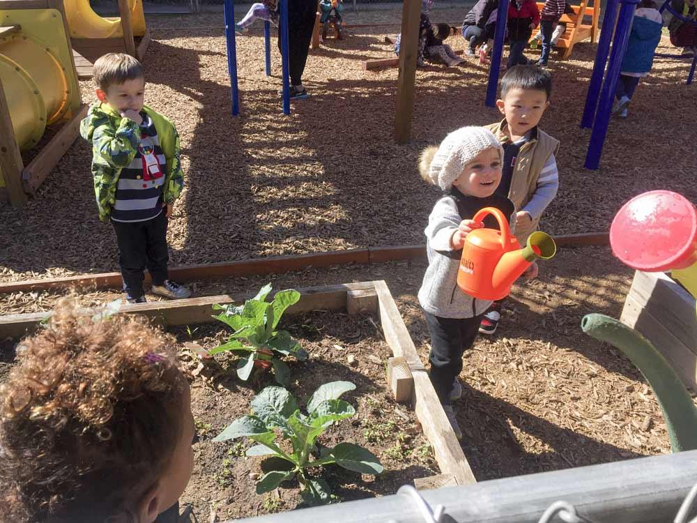 Young elementary school children watering a garden.